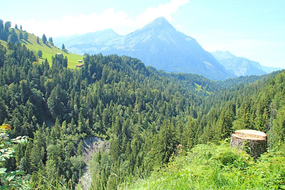 Das bewaldete Suldtal bei Aeschi