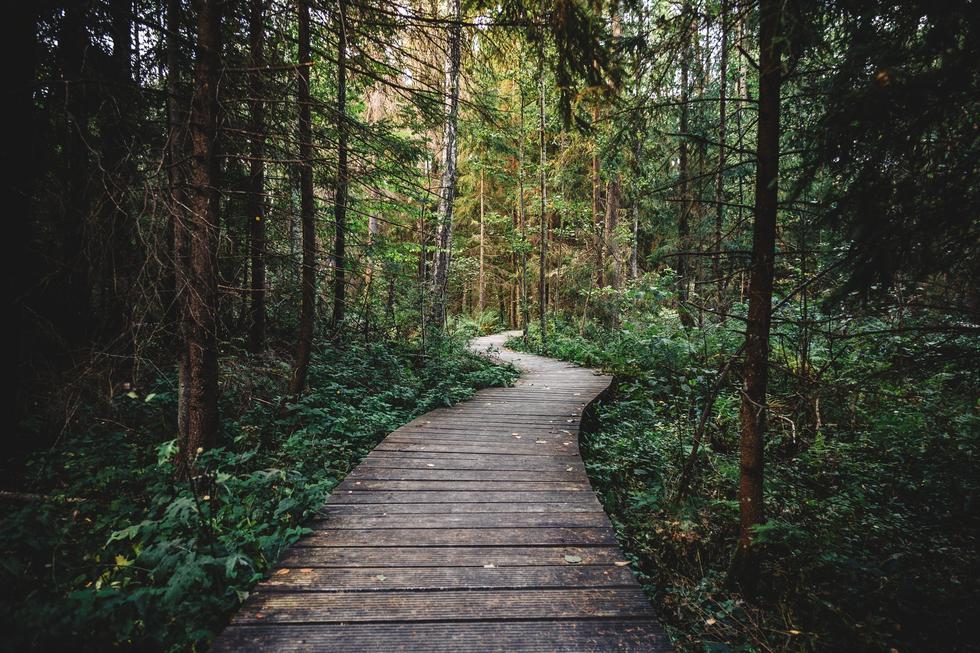 758ews4yrraug6mxo40z wood nature walking dark
