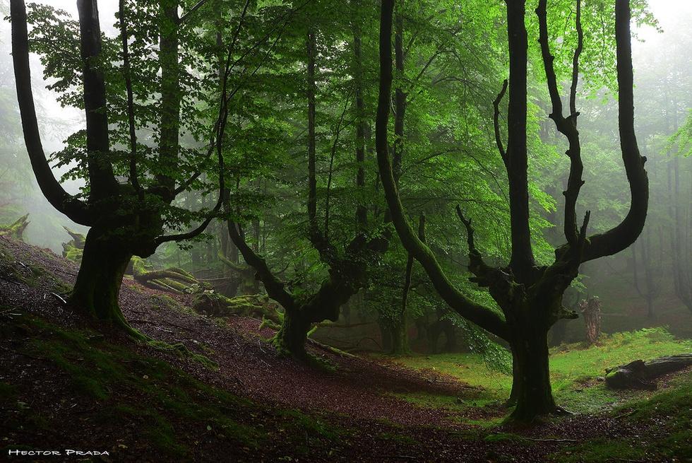 C3vxslbgsl6wex6iqwyx the sacred forest  aqu os dejo otra fotografa de este rin  flickr