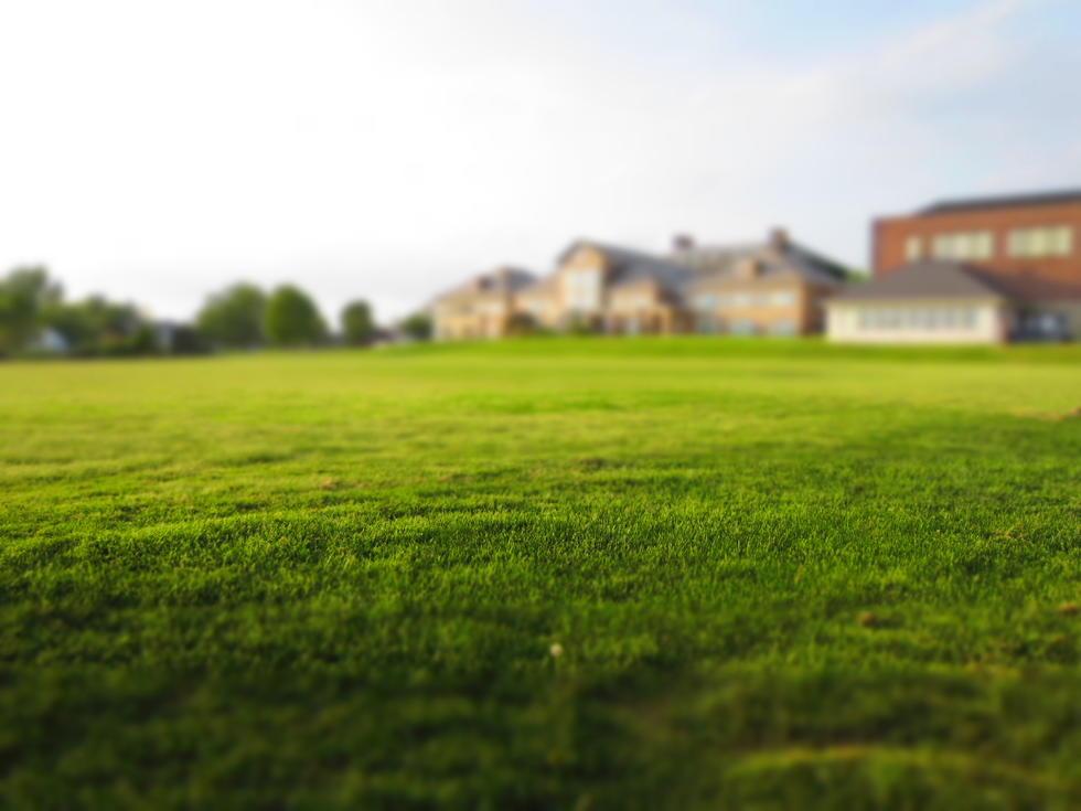 Gfenwzzmtm6tpxwcwjaq summer grass