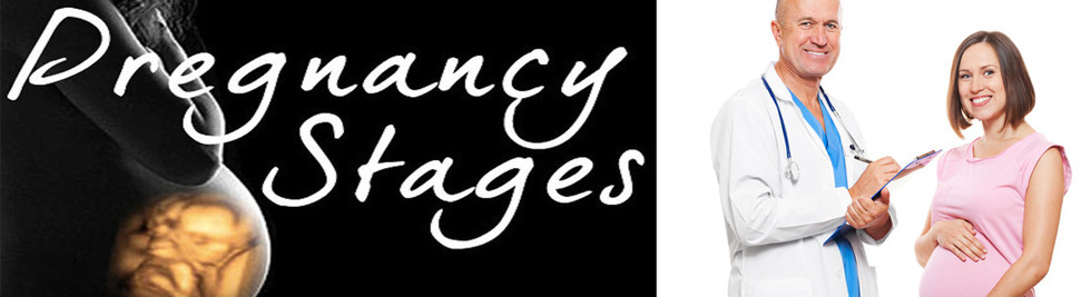Section image pregnancy stages banner 4