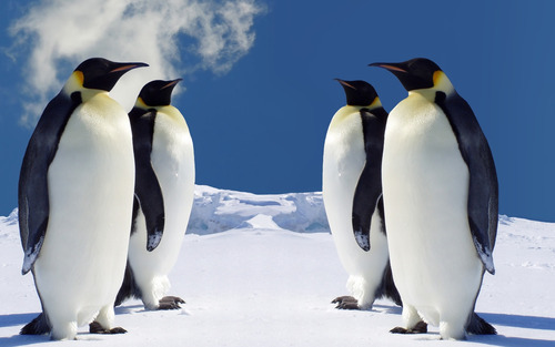 Section_image_penguins-wallpaper