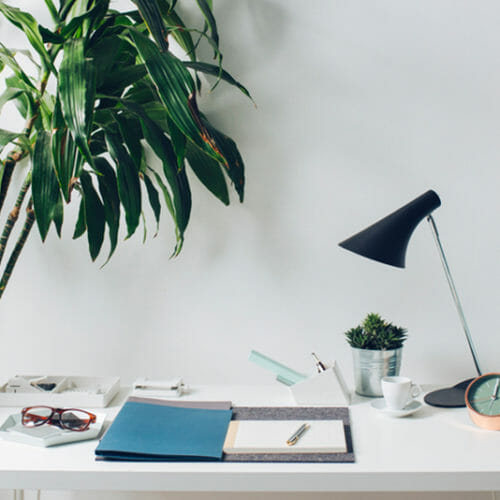The Ultimate Guide to Office Plants