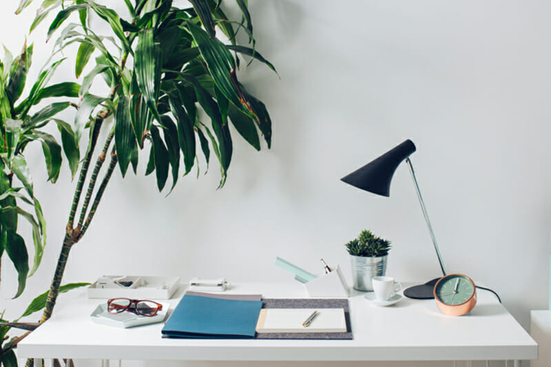 the ultimate guide to office plants and succulents