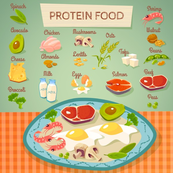 Protein - 16 Best Ways to Maintain Weight Loss
