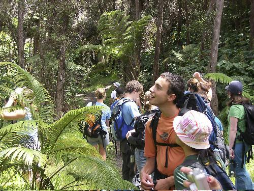 Jonathan I. Sasmor '07 surveys the endemic Hawaiian tree ferns on the descent of the forested face of the Kilauea crater.