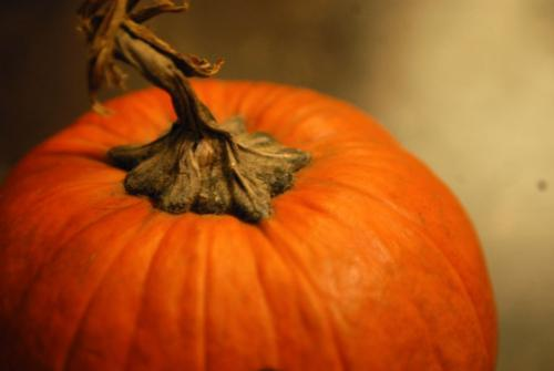 """In Ireland, it was not pumpkins but turnips that used to be carved up and lit to guide """"Jack of the Lantern."""""""