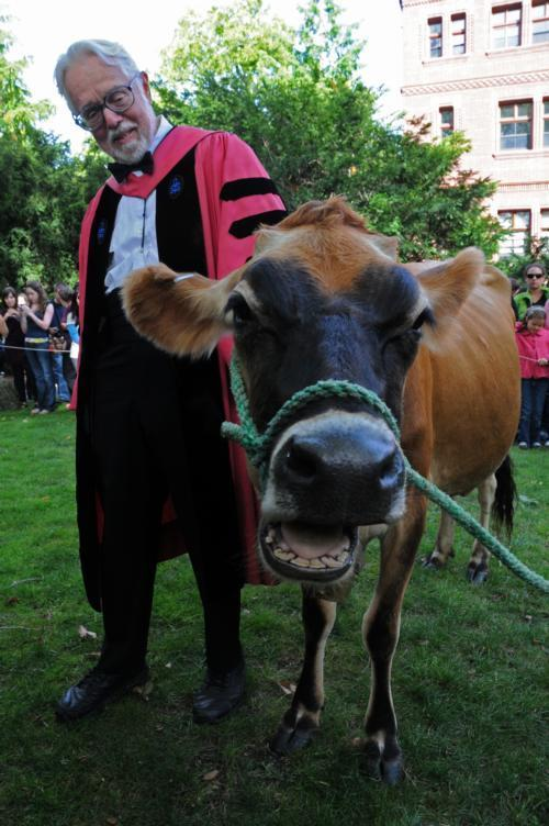 In 2009, Harvey G. Cox Jr. celebrates his retirement by exercising his right as the Hollis Research Professor of Divinity to graze his cows in Harvard Yard.