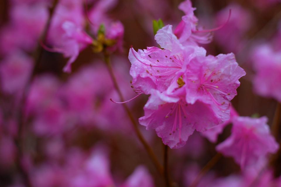 Springtime flowers bloom outside Lionel Hall.