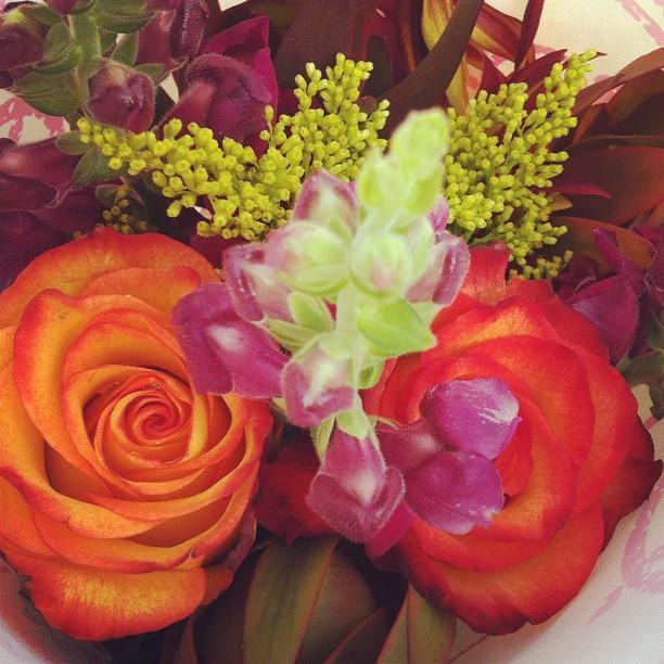 """Fall flowers are essential""—Megan B. Prasad '15, Crimson Staff Writer"