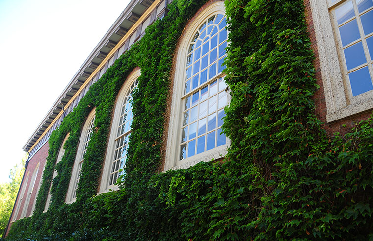 Ivy grows on Harvard's Memorial Church on a warm August day.
