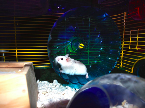 Paper the Hamster