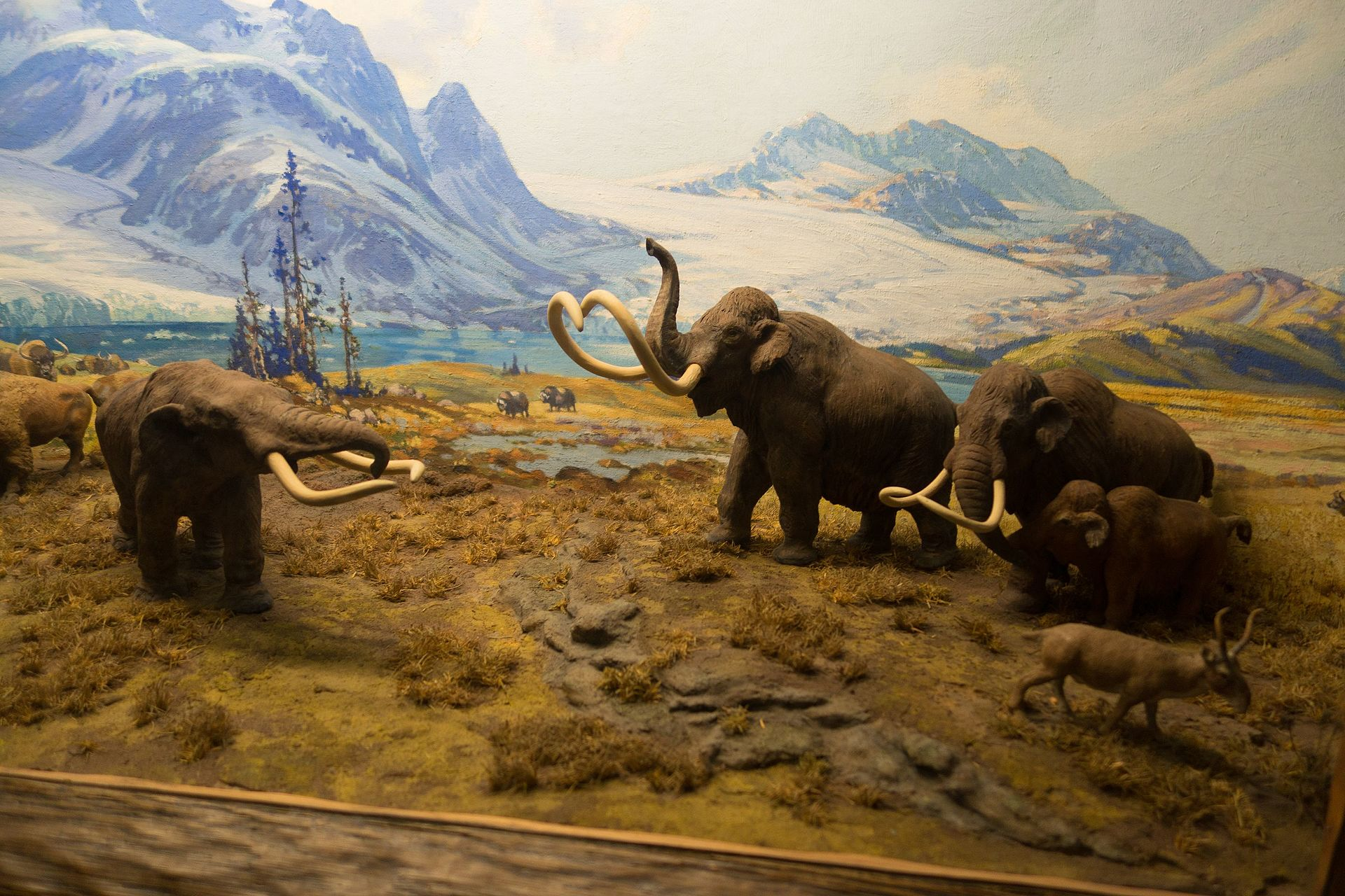 Some mammoths.