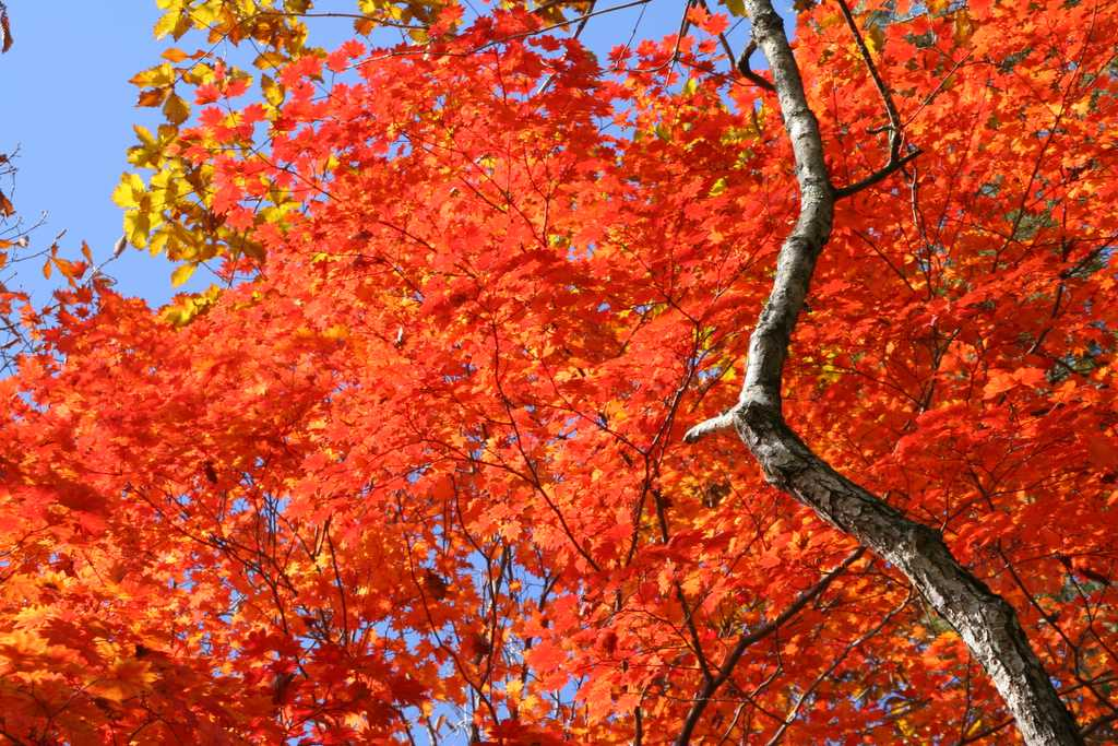 Read ahead for music to accompany the glorious colors of fall.