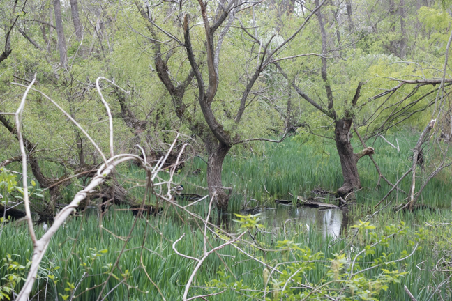 Where Muddy Pond once sat is now a shallow wetland filled with granite blocks.