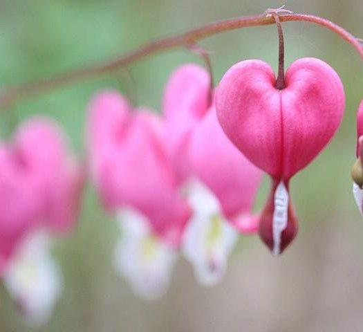 Plus Size Spring Love