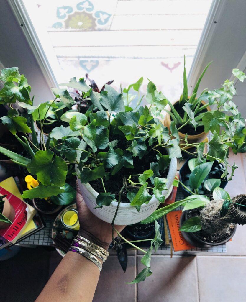 Creating Intentional Botanical Spaces- English Ivy