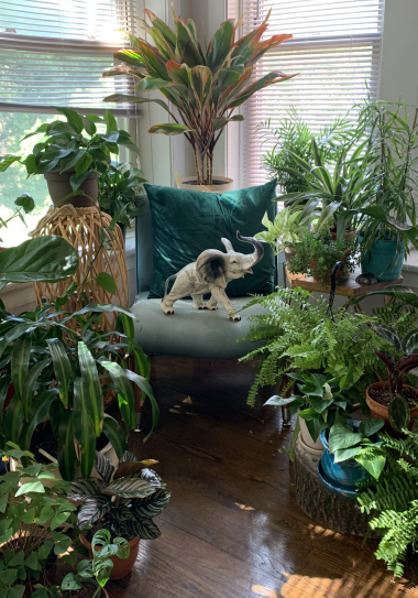 Creating Intentional Botanical Spaces- @_justIVES