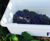 "Catena Institute of Wine and UC Davis Host ""The Future of Wine Science"""