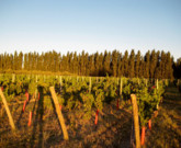 (EN) A Pinot Noir From Argentina That Stands Out in a Sea of Malbecs