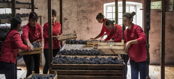 Sorting Through Grapes