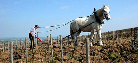 Vineyard, Horse and Plow