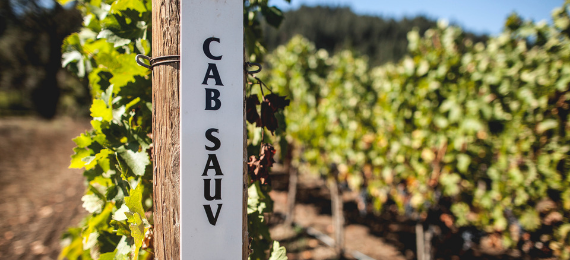 Revana Cab Sauv vineyard