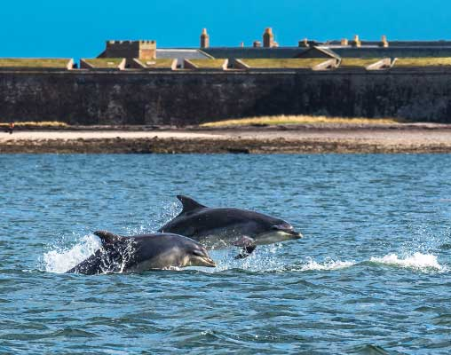 Dolphins near Inverness