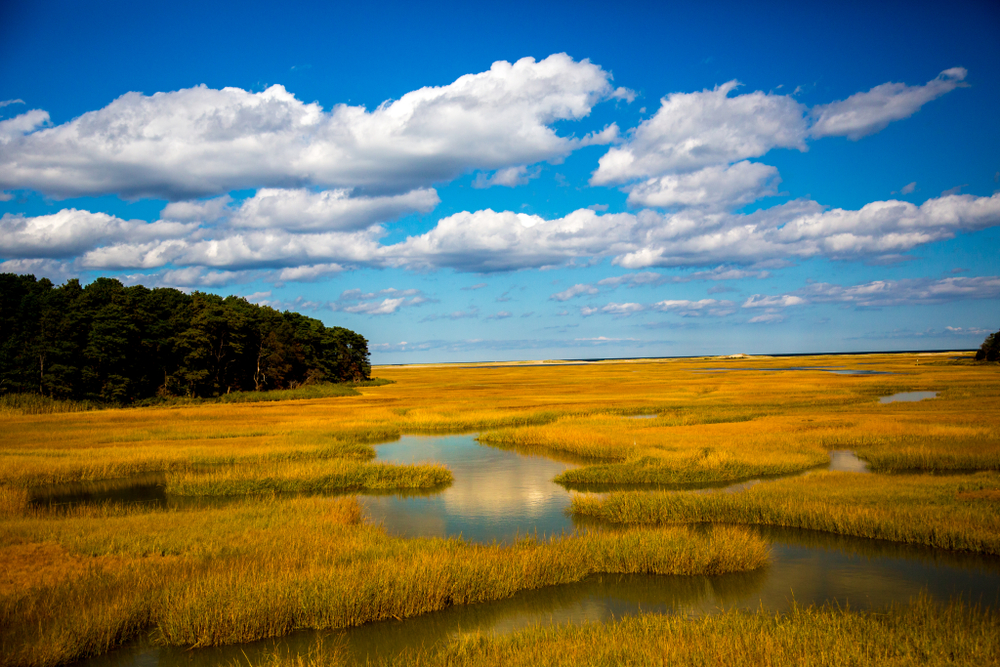 Salt marsh near Sandwich, MA
