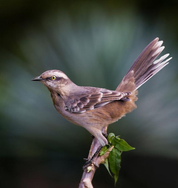 Sick helmut pdf brasileira ornitologia