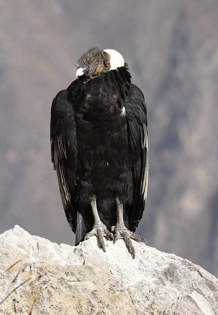 Condor Login