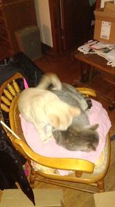 Taking care of kitties!