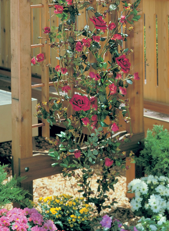 This beautiful and easy-to-build garden trellis would be a wonderful addition to any outdoor space.