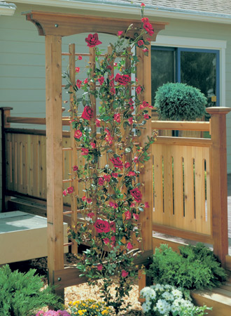 Rose-Covered Trellis