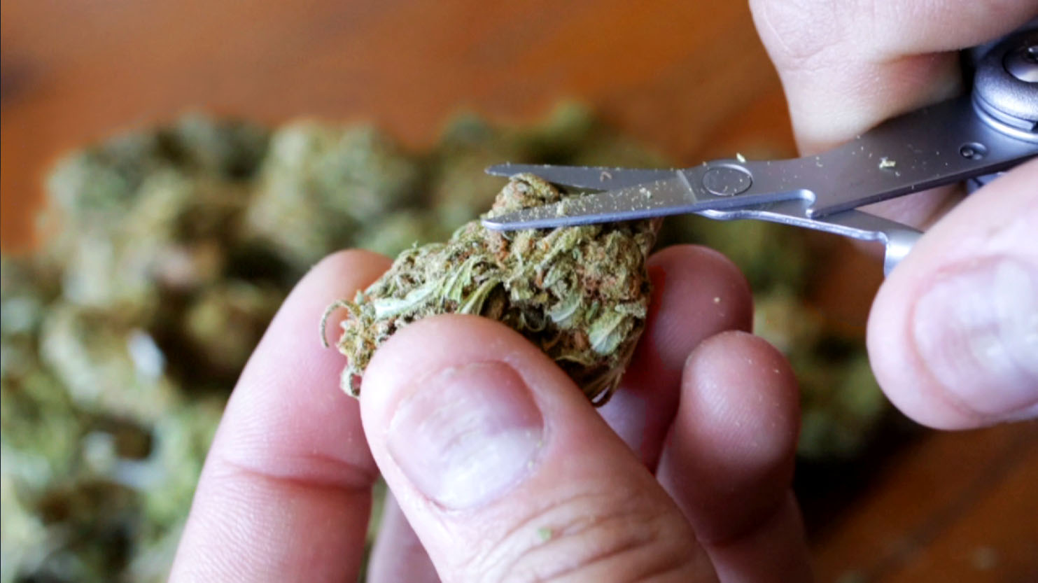 Special Coverage: Youth And The Marijuana Industry