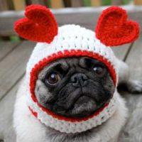 dog-etsy-valentines-day-1