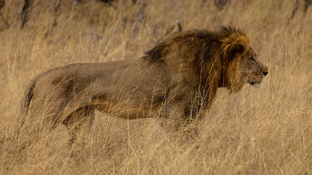 Cecil Vs. America's Social Injustices