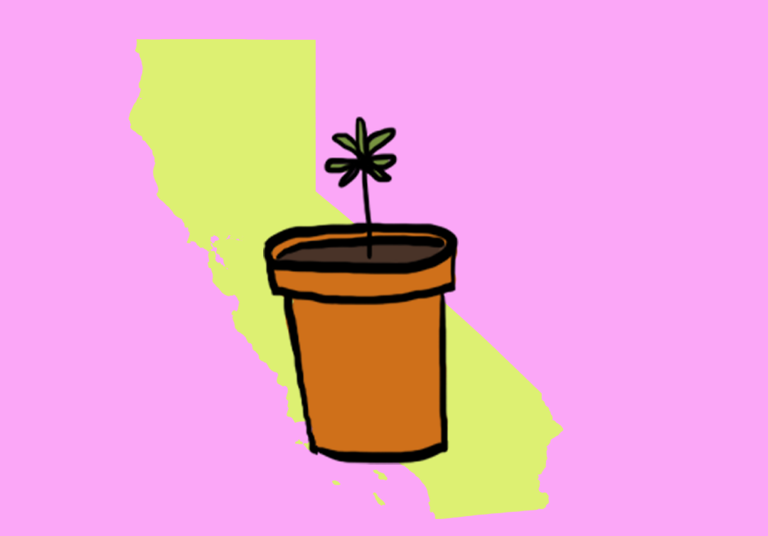 The Ultimate Consumer Guide To California Cannabis Law