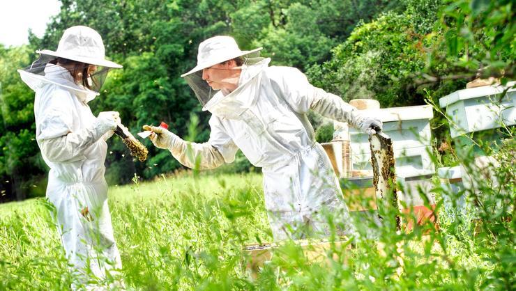Andre Burnham '18 checks the beehives
