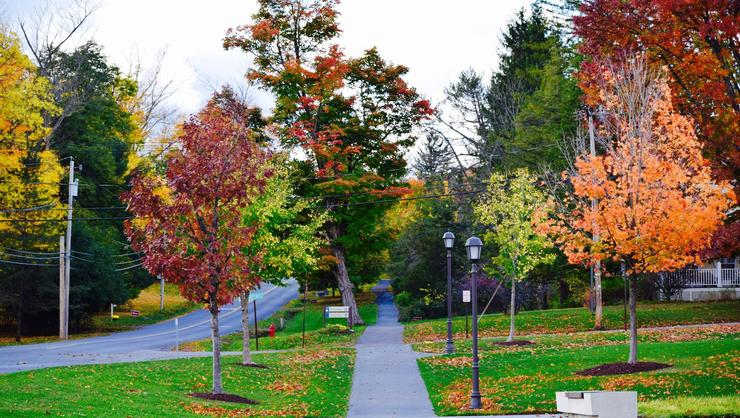 A paved path disappearing into a tunnel of fall foliage.
