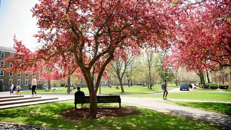 Spring; student under cherry tree
