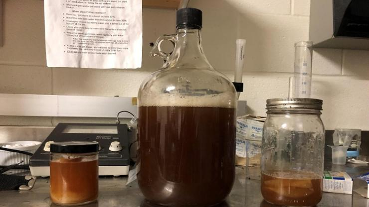 The kombucha fermentation process was just one of the food production projects students tackled in the Introduction to Science of Food.