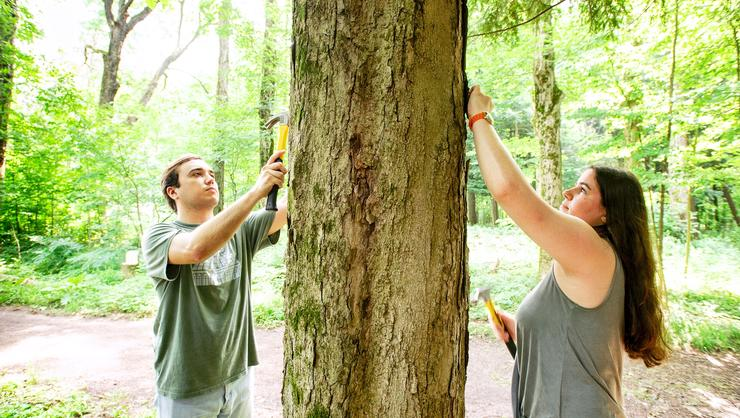 Sustainability interns Nick Pace '19 and Hayley Berliner '19 mark trails with new signs in Kirkland Glen.