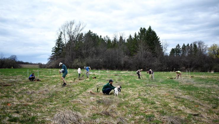 Students and other Hamilton community members plant trees on the old golf course on April 21.