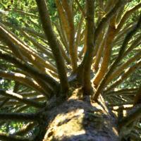 Arboretum Speaker Series