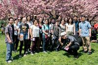 Japanese Program Visits Brooklyn's Cherry Blossom Festival