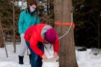 It's Maple Sugaring Time!