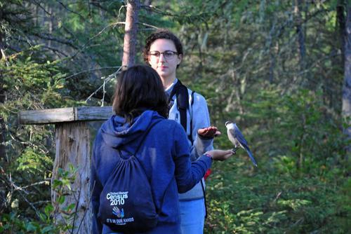 Adirondack Program - birding tour