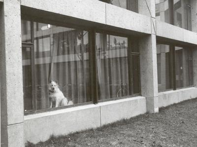 dog in residence hall