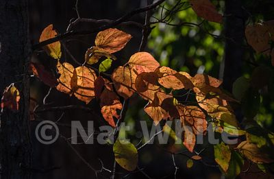 Canyon_Farm-leaves-NAW_0117-October_26_2017